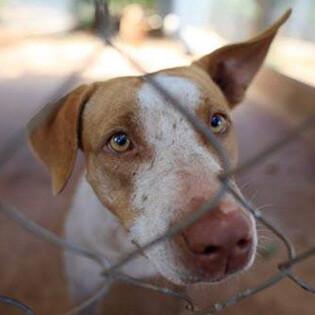 Doris Day Animal League Fundraising